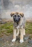 Cão desabrigado de vista humilde Fotos de Stock