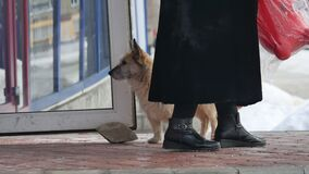 Cão desabrigado disperso que senta-se na frente do alimento de espera do ar livre da entrada da mercearia video estoque