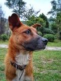 cão desabrigado no parque imagem de stock royalty free