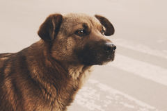 Cão desabrigado só Imagem de Stock