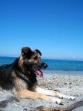 Cão descansado imagens de stock royalty free
