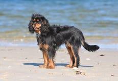 Cão descuidado Imagem de Stock Royalty Free