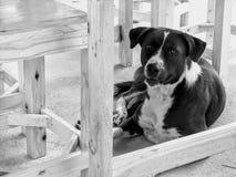 Cão disperso bonito sob a tabela imagem de stock