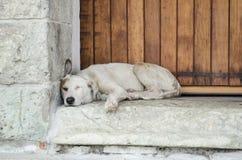 Cão disperso branco que dorme na rua Imagens de Stock