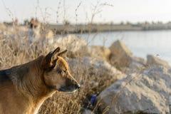 Cão disperso na praia foto de stock