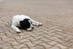 Cão disperso nas ruas Imagens de Stock