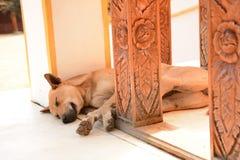 Cão disperso tailandês que dorme no assoalho Foto de Stock