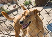 Cão do abrigo Fotografia de Stock Royalty Free