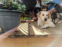Cão do alargamento de Lense fotografia de stock royalty free