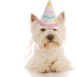 Cão do aniversário Fotografia de Stock Royalty Free
