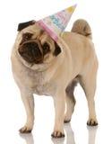 Cão do aniversário Fotografia de Stock