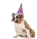 Cão do aniversário Imagens de Stock
