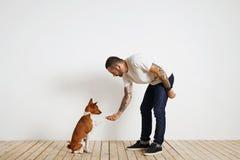 Cão do basenji do treinamento em casa foto de stock royalty free