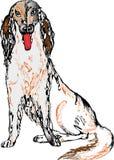 Cão do branco do setter Fotografia de Stock