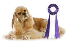 Cão do campeão Foto de Stock