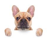 Cão do cartaz da bandeira fotos de stock