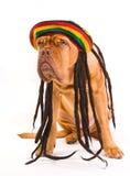 Cão do chapéu de Rastafarian Fotografia de Stock Royalty Free
