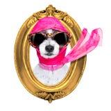 Cão do chique da diva imagem de stock royalty free