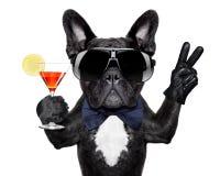 Cão do cocktail Fotos de Stock
