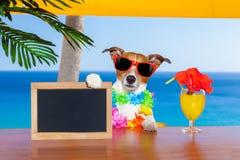 Cão do cocktail Imagem de Stock Royalty Free