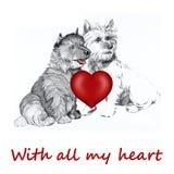 Cão do Collie com coração do Valentim Imagem de Stock