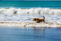Cão do companheiro que aprecia seu tempo na praia fotografia de stock