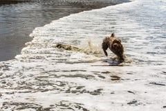 Cão do companheiro que aprecia seu tempo na praia foto de stock royalty free