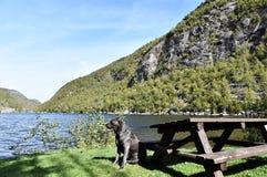 Cão do Condado de Essex dos lagos da cascata dos Estados de Nova Iorque Fotografia de Stock