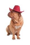 Cão do cowboy fotos de stock royalty free
