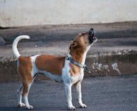 Cão do descascamento imagem de stock