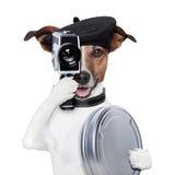 Cão do diretor de filme imagens de stock