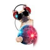 Cão do disco do DJ Foto de Stock