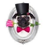 Cão do doente do amor dos Valentim Imagens de Stock