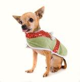 Cão do duende Imagem de Stock Royalty Free