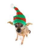 Cão do duende Fotografia de Stock Royalty Free
