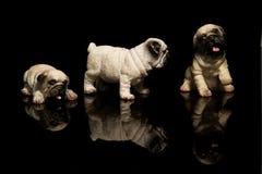 Cão do espanador Fotos de Stock