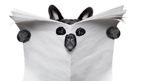 Cão do espião que lê um jornal imagens de stock royalty free