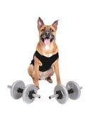 Cão do exercício Fotos de Stock Royalty Free
