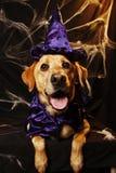 Cão do feiticeiro de Halloween fotografia de stock royalty free