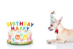 Cão do feliz aniversario Imagens de Stock
