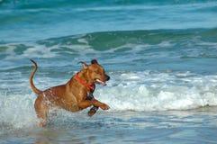 Cão do feriado Imagem de Stock Royalty Free