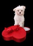 Cão do feriado fotos de stock royalty free