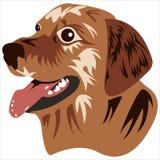 Cão do focinho Imagens de Stock Royalty Free