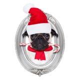 Cão do freme de Papai Noel Fotografia de Stock