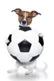 Cão do futebol fotografia de stock