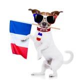 Cão do futebol do futebol Imagens de Stock Royalty Free