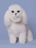 Cão do gato Fotos de Stock Royalty Free