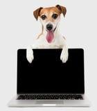 Cão do gestor de escritório com o laptop preto da tela Imagem de Stock