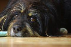 Cão do híbrido imagem de stock