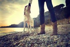 Cão do homem da amizade fotografia de stock royalty free